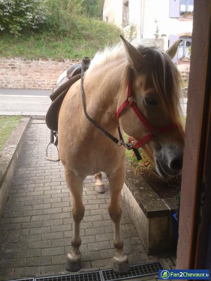 Buster devant la porte d'entrée :) : Photos rigolotes de chevaux