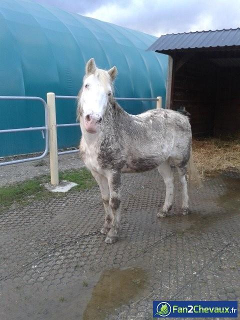 PLUME  : Les plus belles photos de chevaux