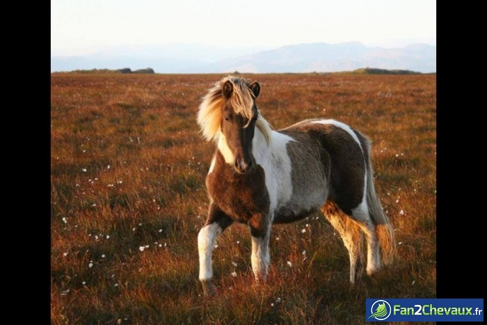 Photo d'un cheval en liberté : Photos de chevaux sauvages