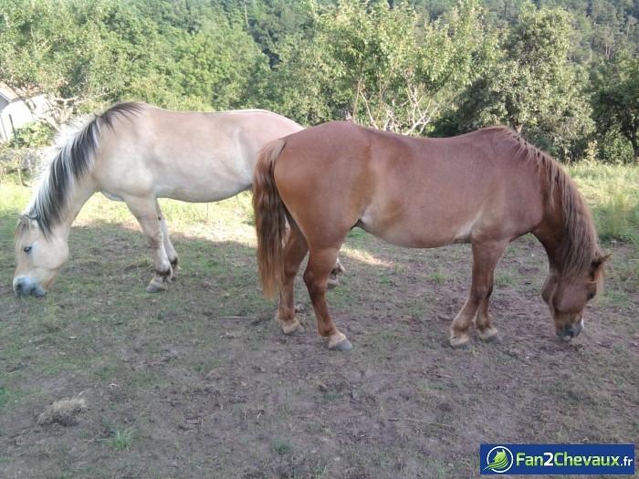 Pause casse croute : Les plus belles photos de chevaux