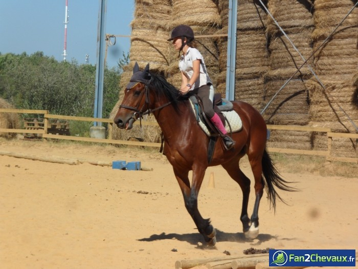 Voici Ma Meilleur Amie et sa jument ♥  : Photos du cheval des membres