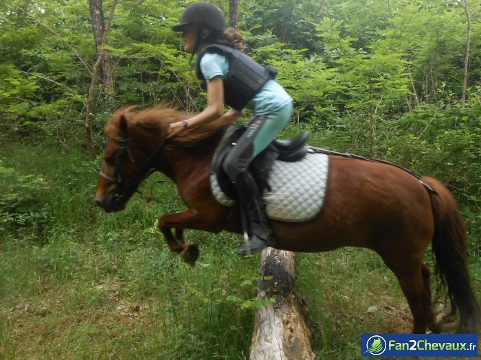 Marquise et moi Cross !!  : Photos de Poneys