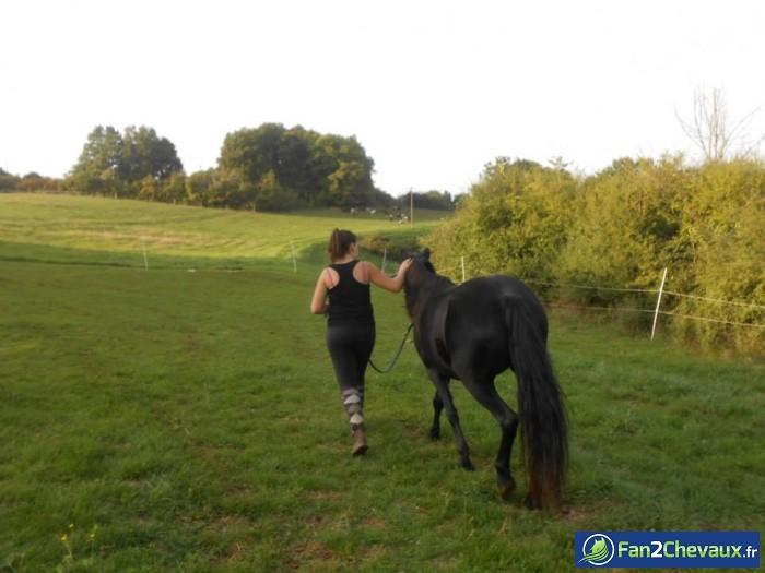 Moi qui ramene Trainte au pré ♥  : Photos du cheval des membres