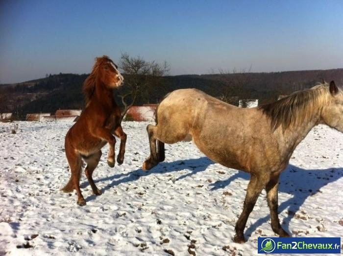 La recré !!  : Photos rigolotes de chevaux