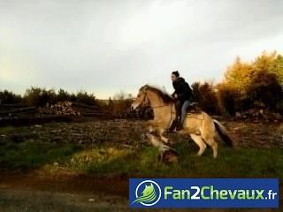 Saut de grume avec Buster : Photos rigolotes de chevaux