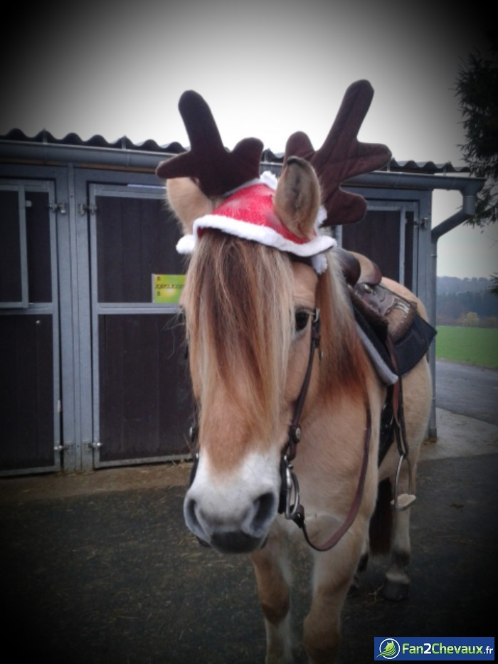 C'est bientôt noel :) : Photos rigolotes de chevaux