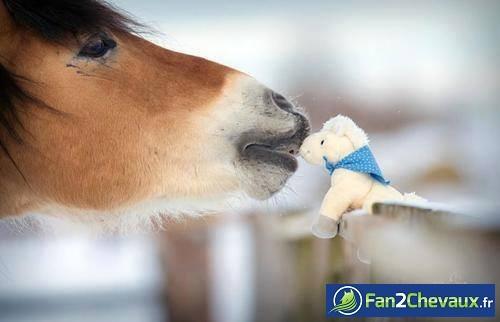 Bisous de cheval : Photos de chevaux sauvages
