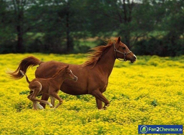 Photo de poulain à adopter : Photos de poulains