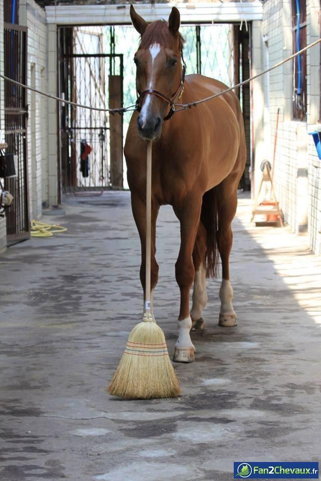 Quand un cheval passe le balai : Photos rigolotes de chevaux