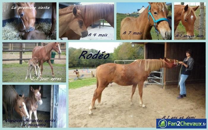 L'évolution de mon poulain : Photos du cheval des membres