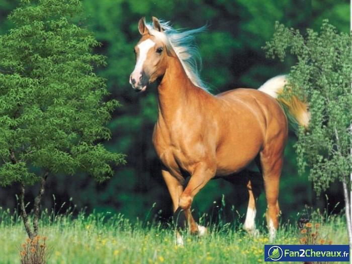 Une photo de chevaux : Photos de chevaux sauvages