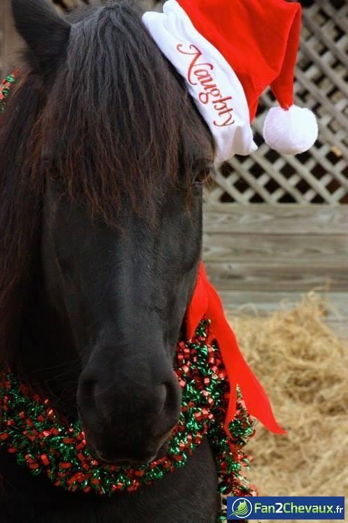 Joyeux noel les fans de chevaux : Photos rigolotes de chevaux