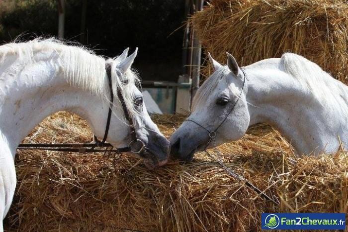 Bonne année 2014 avec les chevaux : Photos rigolotes de chevaux