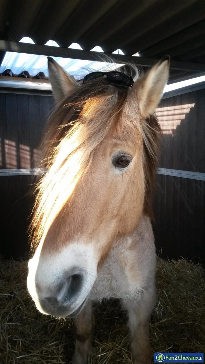 Buster qui avait sorti ses lunettes de soleil :) : Photos rigolotes de chevaux