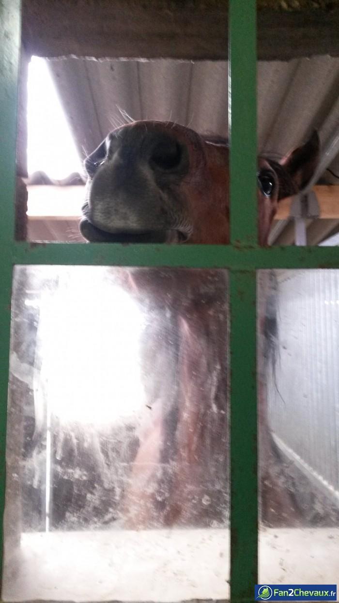 Coucou vous :) : Photos rigolotes de chevaux