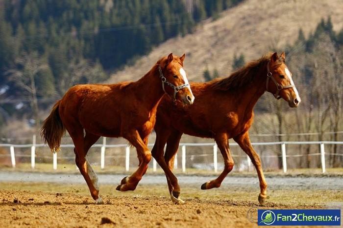 Chevaux en pleine course : Photos rigolotes de chevaux