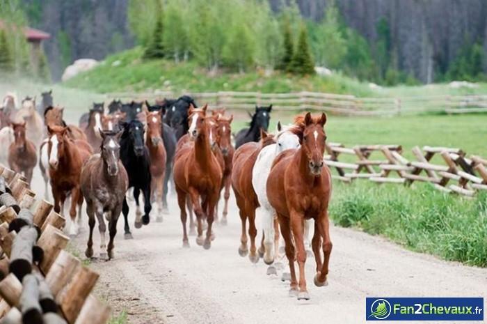 Des chevaux sauvages : Photos de chevaux sauvages