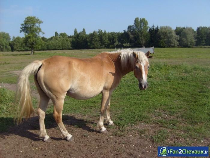 Voila mon cheval western : Photos du cheval des membres