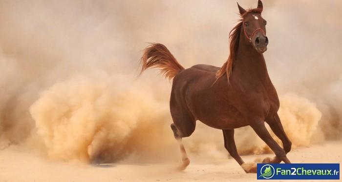 Un cheval en liberté au Maroc : Photos de chevaux sauvages