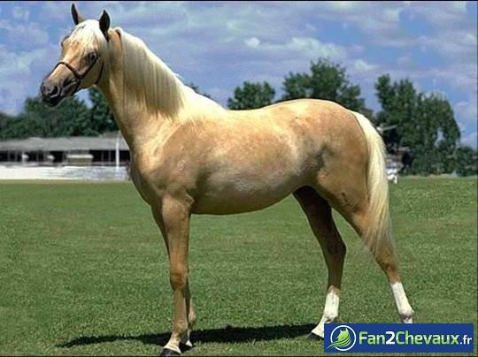 Et un nouveau cheval pour mon centre équestre : Photos du cheval des membres