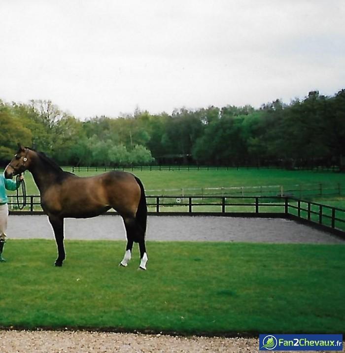 Voilà un autre arivant !!!!!  : Photos du cheval des membres