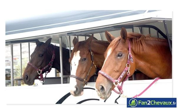 En route pour la compétition de CSO : Photos du cheval des membres