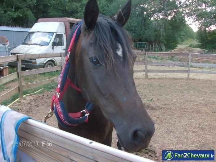 Prunella mon amour de cheval : Photos du cheval des membres