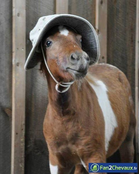 Protéger son cheval du soleil : Photos rigolotes de chevaux