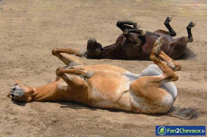 On a trop chaud : Photos de chevaux sauvages