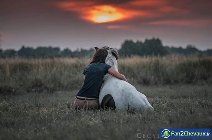 Coucher de soleil : Photos du cheval des membres