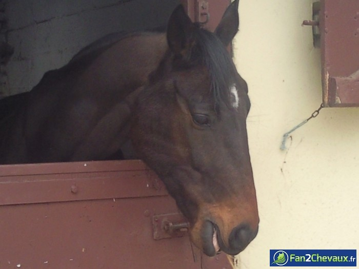 Navaro : Photos de chevaux sauvages