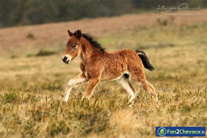 Dans l'herbe : Photos de chevaux sauvages
