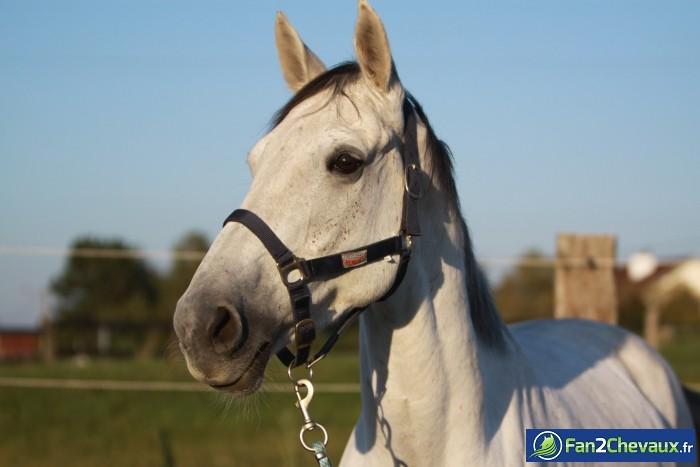 Royalty : Photos du cheval des membres