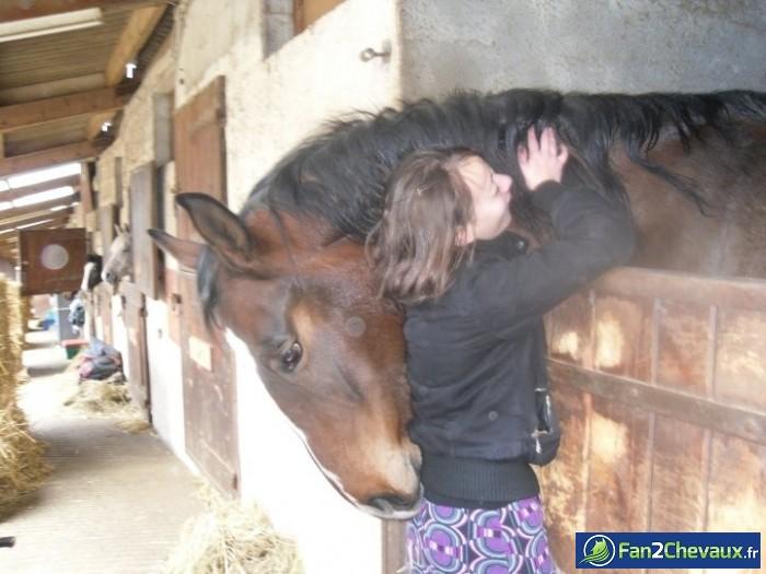 Quanto et moi  : Photos de chevaux sauvages
