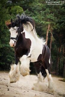 Le plus beau cheval sauvage