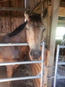 Photo d'un quater horse