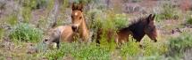 Des poneys sauvages