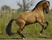 Un cheval baroque