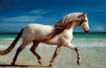Comment reconnaitre un cheval ibérique?