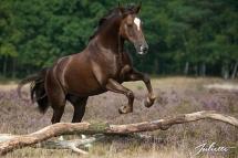 Un saut de cheval sauvage