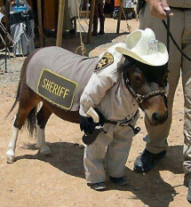 Un poney déguisé en sheriff