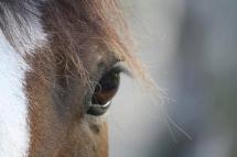 N'envoyez pas un cheval à l'abattoir!