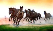 Des chevaux sauvages comme dans un rêve