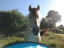 Camping avec les chevaux !!