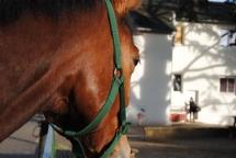 Le regard d'un cheval peut en dire loin