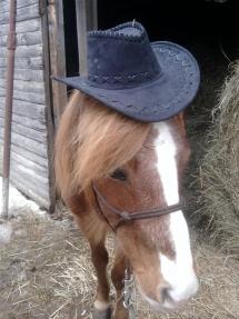 Un cowboy !