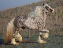 Un cheval de rêve!
