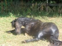 A la fin de leurs journée les chevaux aiment se gratouiller!