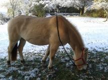 Buster et les premières neiges de l'année dernière :)