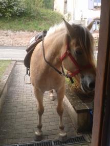 Buster devant la porte d'entrée :)